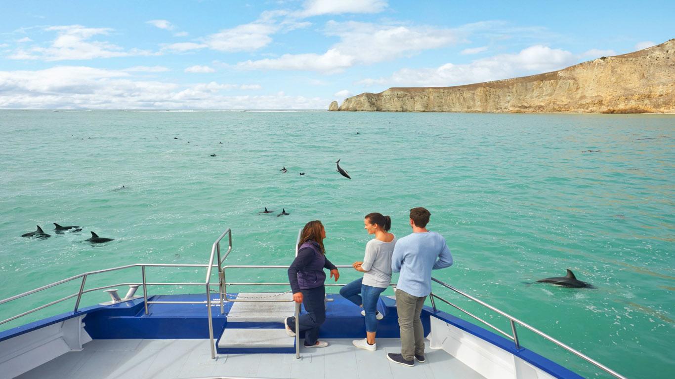 Dolfijnen kijken Kaikoura, Nieuw Zeeland