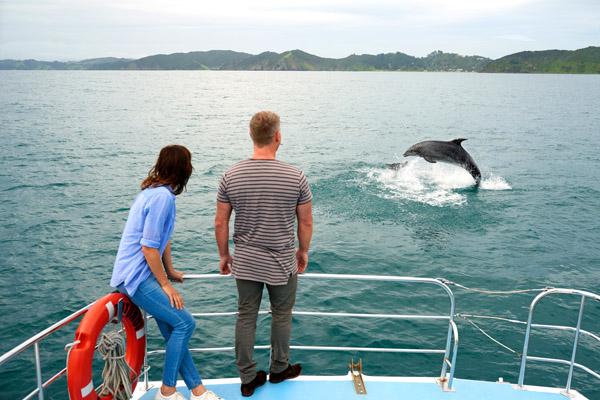 Dolfijnen zwemmen Akaroa