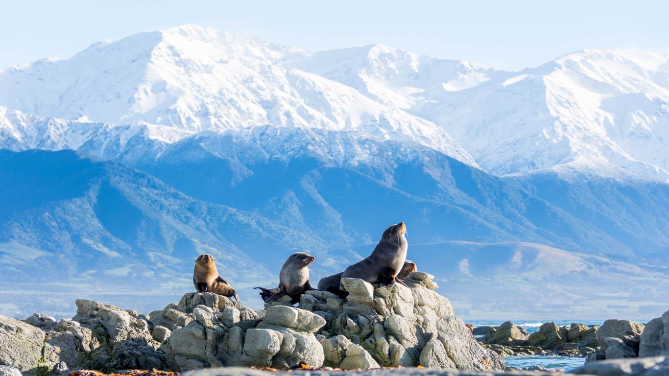 Kaikoura zeehonden in Nieuw Zeeland