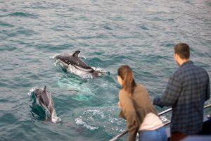 Kaikoura dolfijnen kijken boottocht