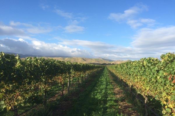 Wijngaarden Blenheim